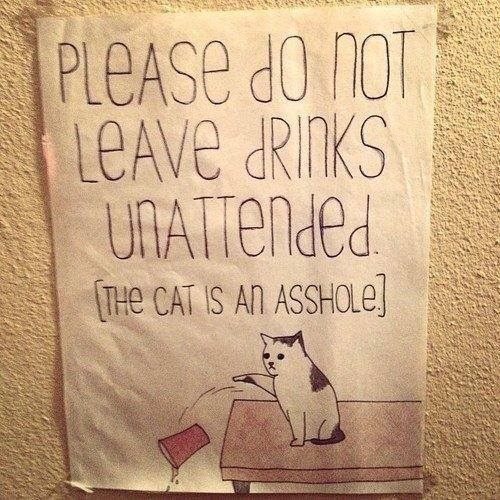 The cat is an asshole